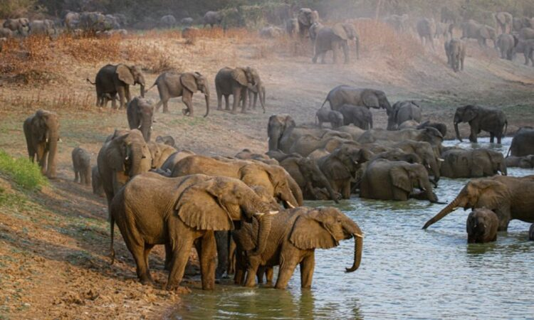 Embassy N'Djamena prioritizes elephant monitoring