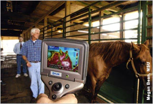 Looking at a horse through a thermal image screen