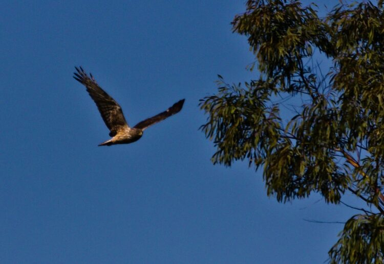 Picture of a flying bird.